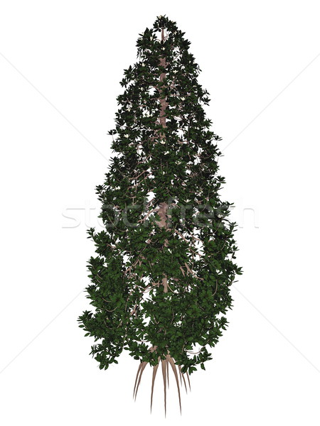 Zuidelijk stier magnolia boom 3d render geïsoleerd Stockfoto © Elenarts