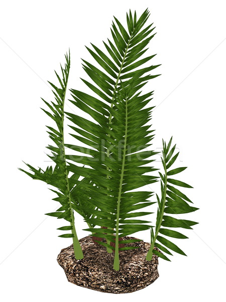 Nipa burtinii prehistoric plant - 3D render Stock photo © Elenarts