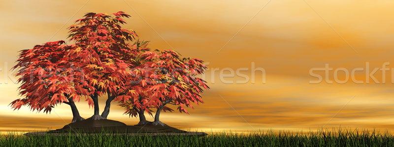 日本語 メイプル ツリー 盆栽 3dのレンダリング 緑の草 ストックフォト © Elenarts