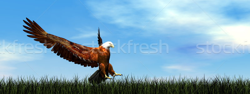 Eagle landing - 3D render Stock photo © Elenarts