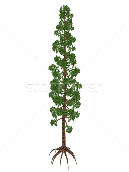 Wollemia nobilis pine prehistoric tree - 3D render Stock photo © Elenarts