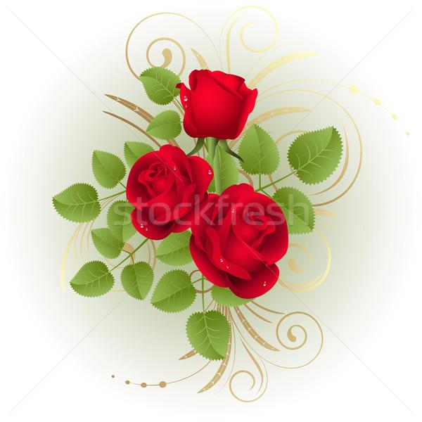 Güller üç kırmızı gül beyaz gül doğa Stok fotoğraf © ElenaShow