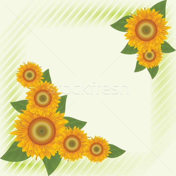 Yeşil soyut ayçiçeği turuncu çizgili çiçek Stok fotoğraf © ElenaShow