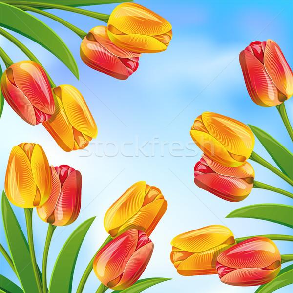 Wiosną Błękitne niebo kwiat projektu liści niebieski Zdjęcia stock © ElenaShow