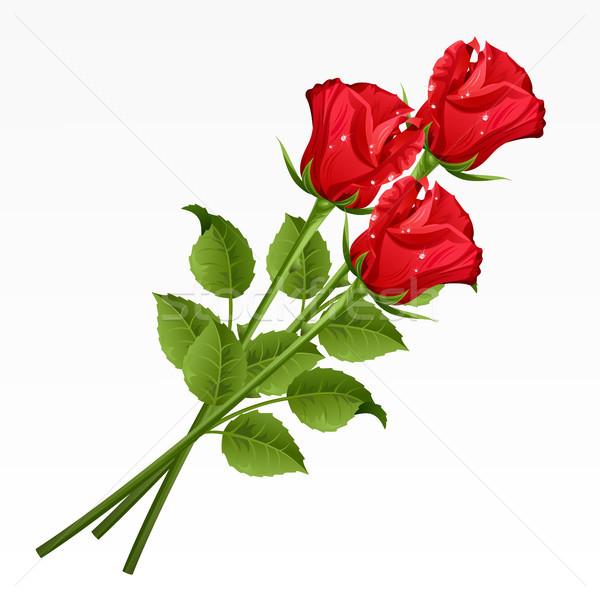Stok fotoğraf: Güller · üç · kırmızı · gül · beyaz · çiçek · gül