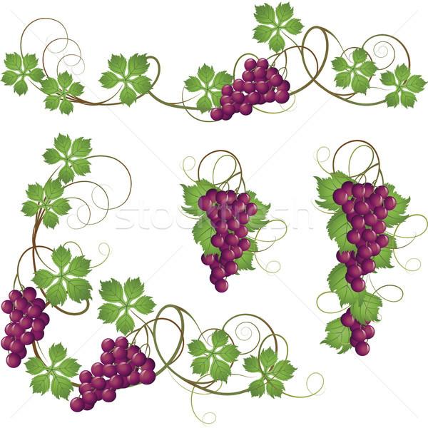 Videira conjunto elementos decoração vinho fruto Foto stock © ElenaShow