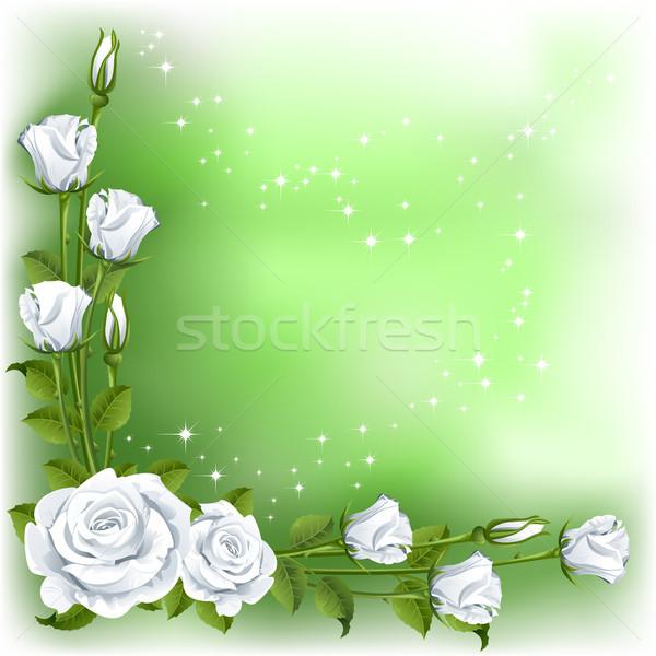 Rose verde bianco fiore rosa bellezza Foto d'archivio © ElenaShow