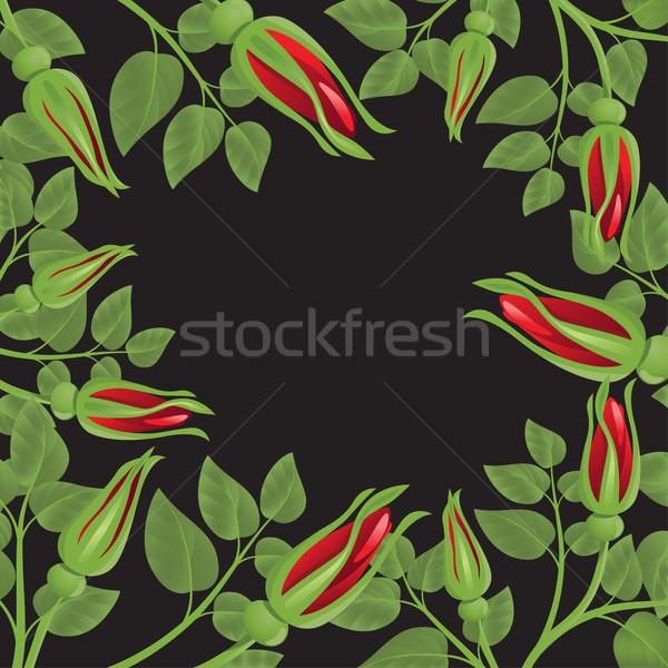 Preto rosas vermelhas folhas verdes flor projeto folha Foto stock © ElenaShow