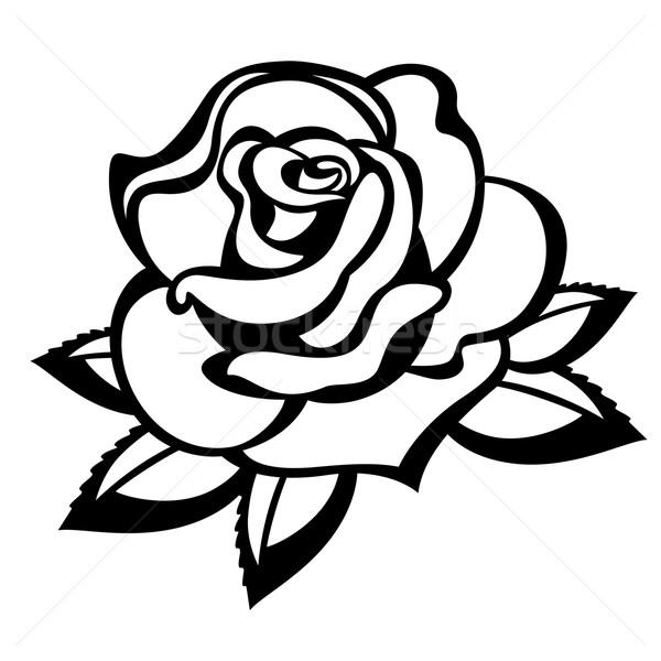 バラ 白 黒白 花 黒 工場 ストックフォト © ElenaShow