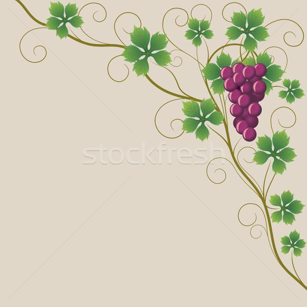 Trauben Merlot Reben Hintergrund grünen Pflanzen Stock foto © ElenaShow