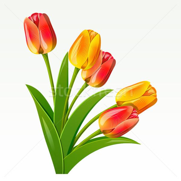 Buket kırmızı lale çiçek güzellik Stok fotoğraf © ElenaShow