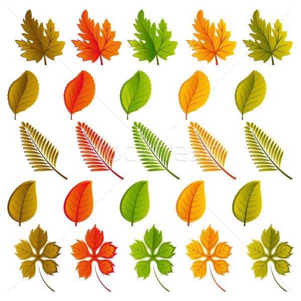 Ayarlamak yaprakları renkler doğa Stok fotoğraf © ElenaShow
