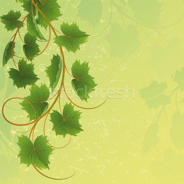 Asma sarı doğa dizayn yaprak arka plan Stok fotoğraf © ElenaShow