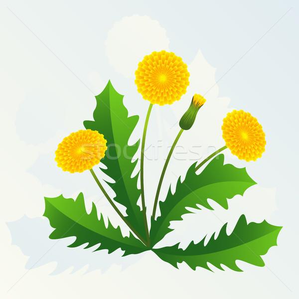 Pissenlit été jaune pissenlits feuilles vertes fond Photo stock © ElenaShow