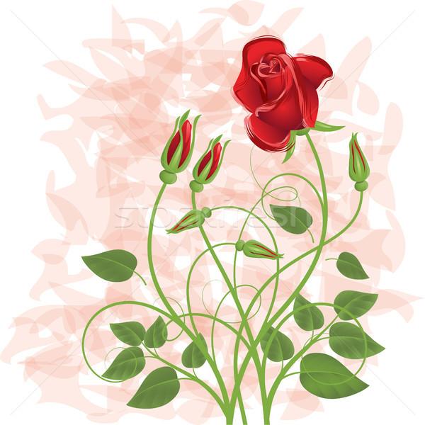 Bouquet Rose Red design feuille vert rouge Photo stock © ElenaShow