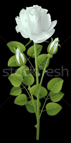 Gül beyaz siyah doğa arka plan güzellik Stok fotoğraf © ElenaShow