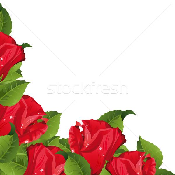 Güller beyaz kırmızı gül çiçek gül doğa Stok fotoğraf © ElenaShow