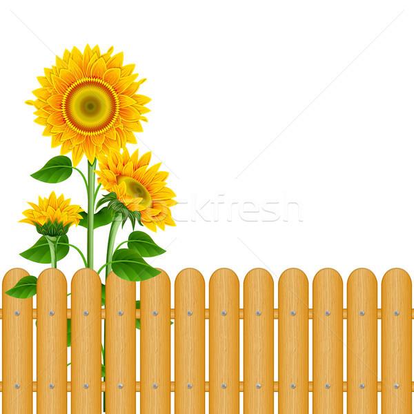 Background with sunflowers Stock photo © ElenaShow