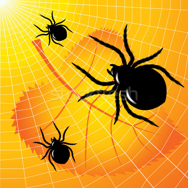Spiders Stock photo © ElenaShow