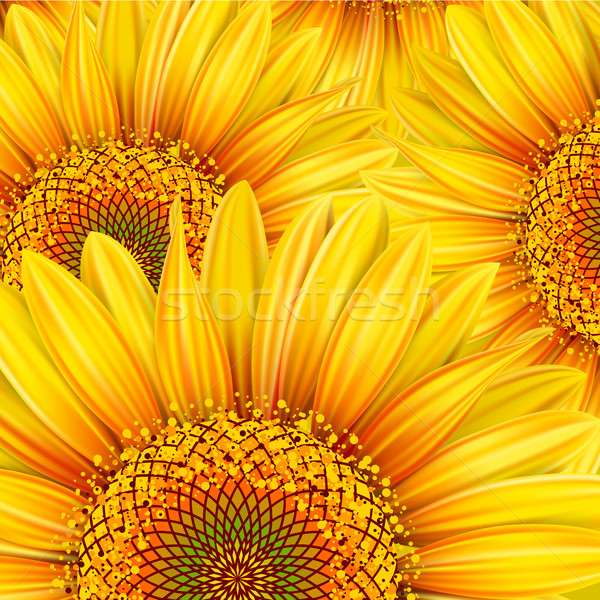 ひまわり 黄色 自然 オレンジ ヒマワリ ストックフォト © ElenaShow