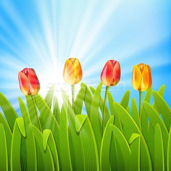 Nyár háttér kék égbolt tulipánok maszk Stock fotó © ElenaShow