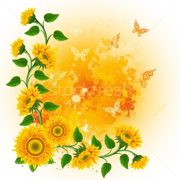 Ayçiçeği turuncu kelebekler çiçek yaprak arka plan Stok fotoğraf © ElenaShow