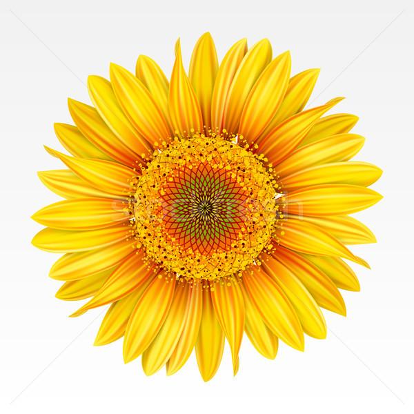 Girassol amarelo branco natureza arte Foto stock © ElenaShow