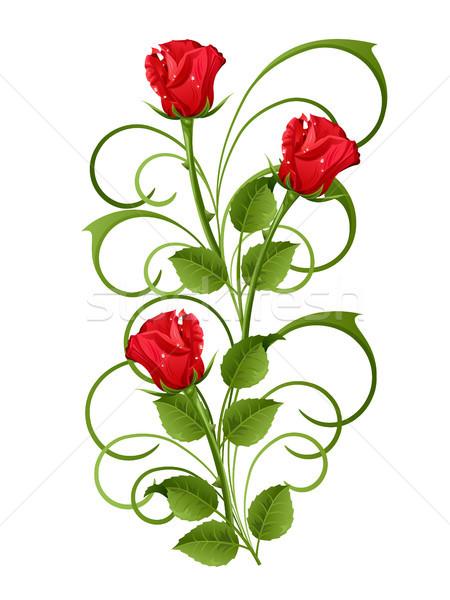 Roses trois roses rouges blanche fleur rose Photo stock © ElenaShow