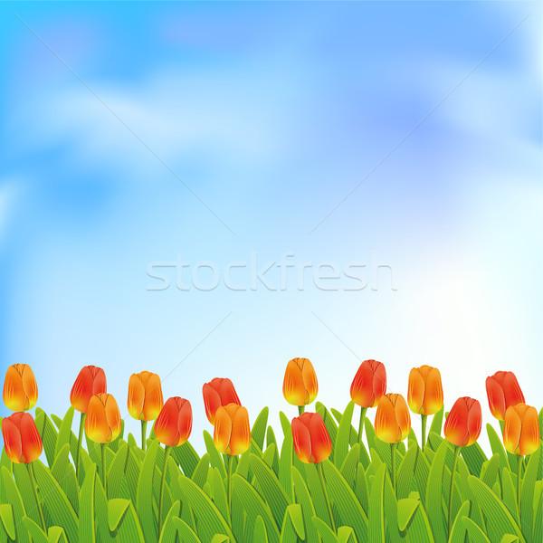 Spring background  Stock photo © ElenaShow
