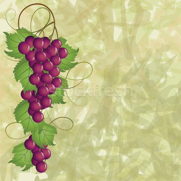 Winorośl zielone projektu roślin banner winorośli Zdjęcia stock © ElenaShow