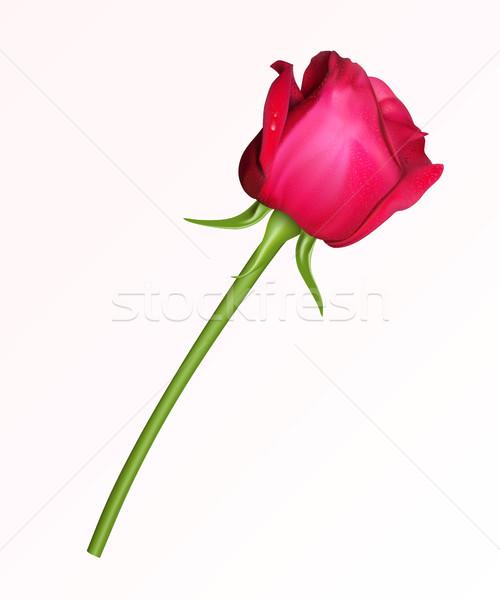 Gül kırmızı gül beyaz çiçek güzellik boyama Stok fotoğraf © ElenaShow
