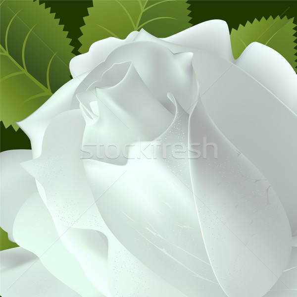 Rosa branco flor folha fundo beleza Foto stock © ElenaShow