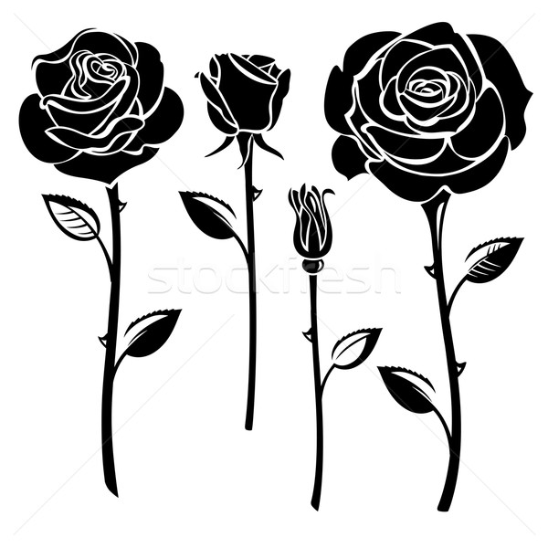 Stok fotoğraf: Güller · toplama · siyah · beyaz · çiçek · gül · doğa