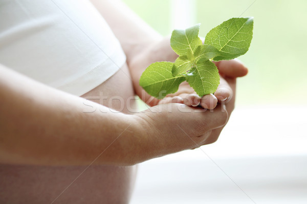 Close-up of a womans bare pregnant belly. Stock photo © ElinaManninen