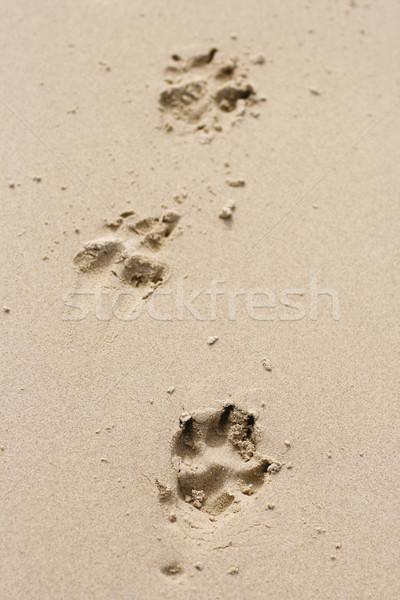 Foto stock: Cão · pata · areia · conjunto · três · praia
