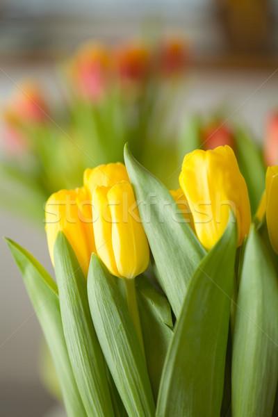 Tulipánok gyönyörű színes húsvét virág levél Stock fotó © ElinaManninen