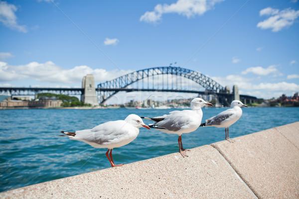 Meeuwen Sydney haven brug drie rij Stockfoto © ElinaManninen