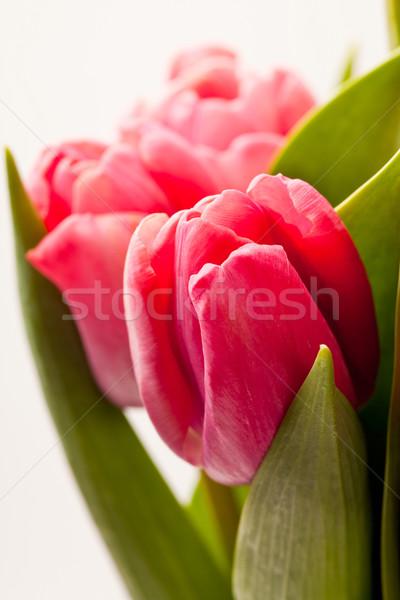 Rózsaszín tulipánok közelkép gyönyörű friss levél Stock fotó © ElinaManninen