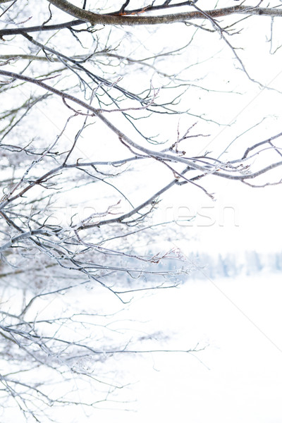 Winter scene Stock photo © ElinaManninen