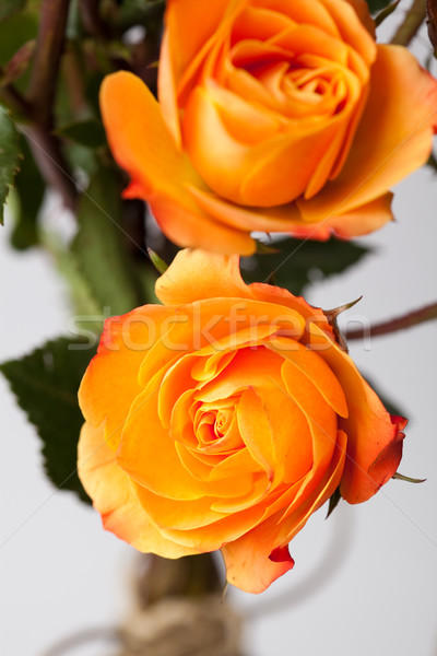 Narancs rózsák közelkép gyönyörű stúdiófelvétel levél Stock fotó © ElinaManninen