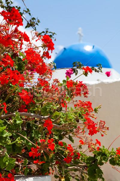Geranium flowers with church background in Santorini Stock photo © ElinaManninen