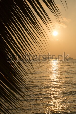 Stock photo: Beautiful view of a tropical beach with palm leaf