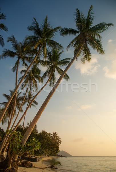Belo praia tropical noite palmeiras céu árvore Foto stock © Elisanth