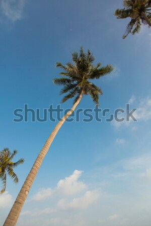 Beautiful palm trees on blue sky background  Stock photo © Elisanth