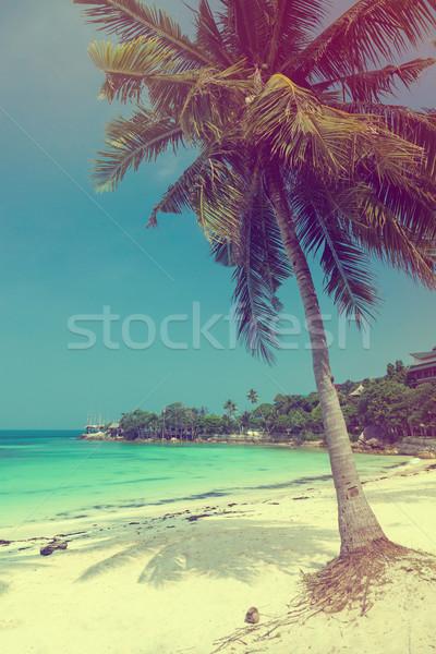 Gyönyörű trópusi tengerpart kókuszpálma fehér homok klasszikus nyár Stock fotó © Elisanth
