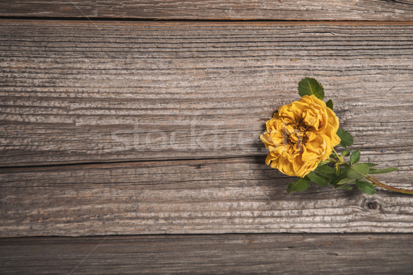 Güzel sarı gül ahşap bo çiçek Stok fotoğraf © Elisanth