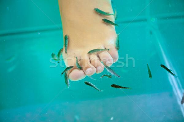 Ryb leczenie uzdrowiskowe lekarza kobieta zdrowia niebieski Zdjęcia stock © Elisanth