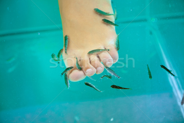 Pesce trattamento termale medico donna salute blu Foto d'archivio © Elisanth