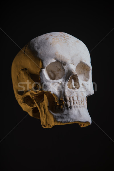 Human skull, replica from real model  Stock photo © Elisanth