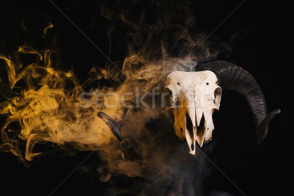 Kos koponya agancs citromsárga füst halloween Stock fotó © Elisanth